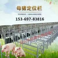 泊头宏基养猪设备厂HJ供应  定位栏  母猪产床  限位栏  猪产床  地板